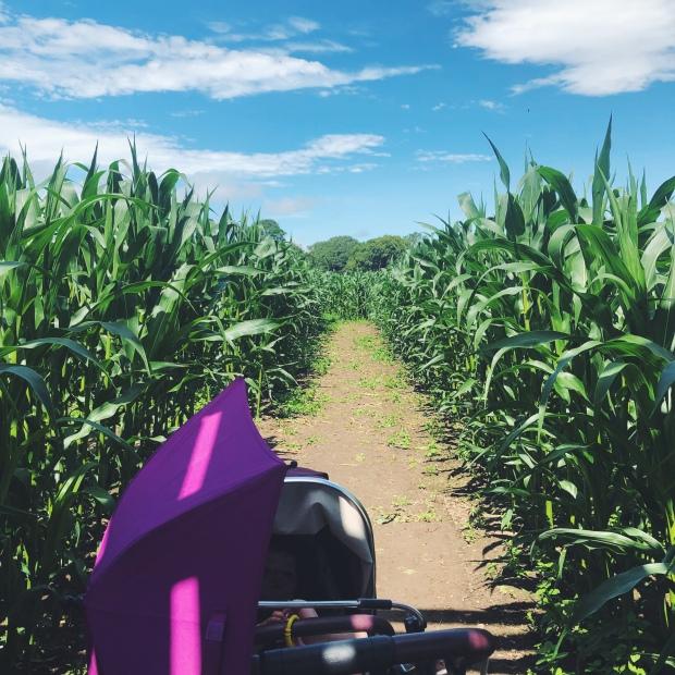 Pram in a maize maze